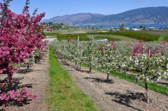 Spring at Happy Valley