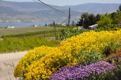 Summerland is a gardener's paradise